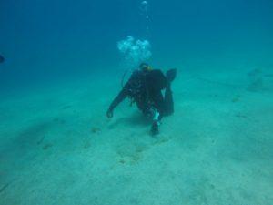 Podvodne fotografije RT DVD Stupnik – Glavotok (Krk)