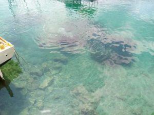 DVD Stupnik na eko akciji čišćenja podmorja u Zaglavu, Dugi otok
