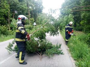 Srušeno stablo u Stupničkoobreškoj ulici - DVD Stupnik