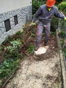 Kontrolirano rušenje stabala i ostalog drveća
