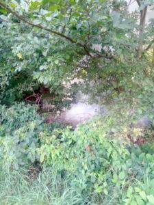 Požar stabla u Donjostupničkoj ulici